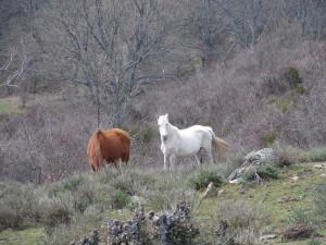 Hiking Madrid Bunkers Cruz Gallega Horses
